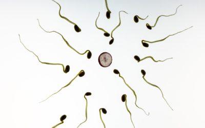 STJ deve colocar ponto final na discussão sobre a cobertura de fertilização in vitro