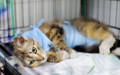 Cirurgias Veterinárias podem ser suspensas para reduzir uso de insumos