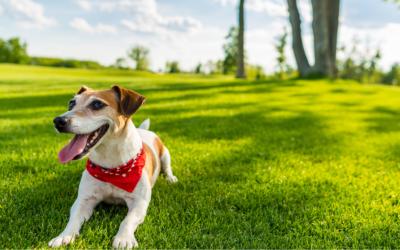 Hotelzinho para cachorro deve indenizar cliente por danos causados à animal